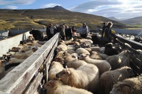 rettir sheep pen