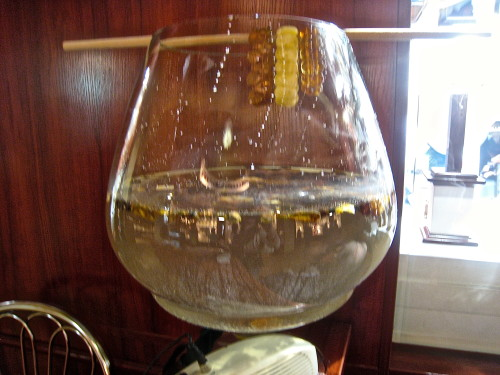 Amber floats in salted water (so does plastic!)
