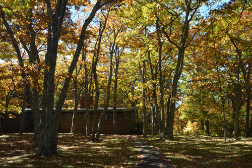 Lodging in a colorful forest